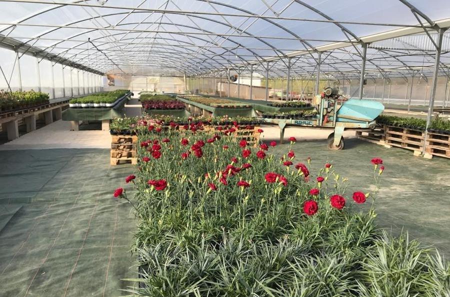 fleurs rouges dans une serre